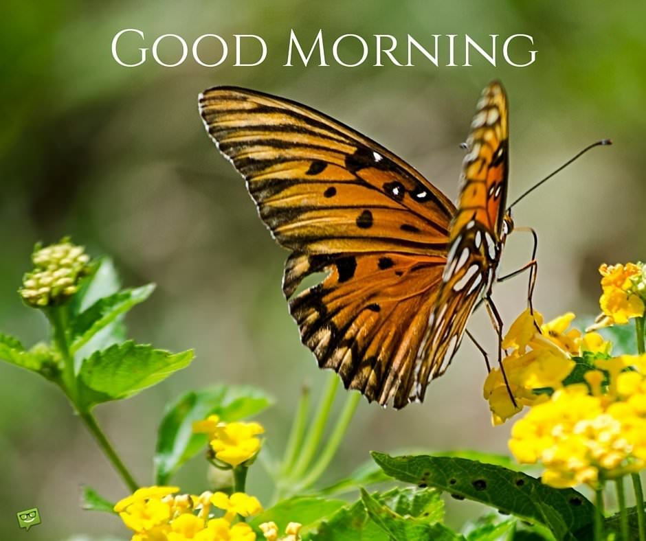 Delicate Harmony Good Morning Pics With Butterflies