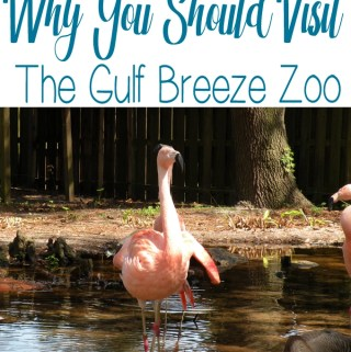 Visit the Gulf Breeze Zoo in Gulf Breeze Florida