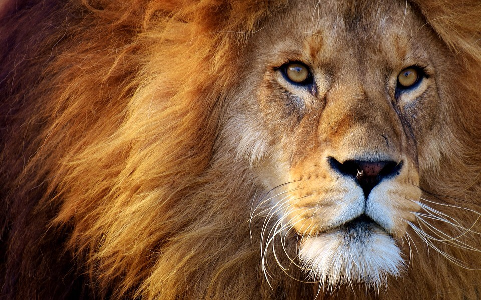 Through the Lens of Lions