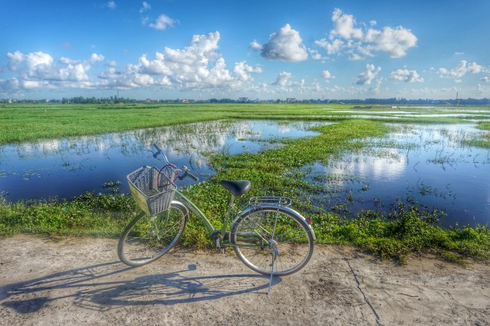 Hoi An Vietnam, paddy fields by bike - things to do in Hoi An