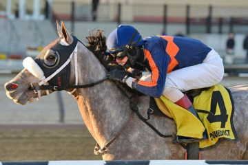 El Areeb Withers Stakes