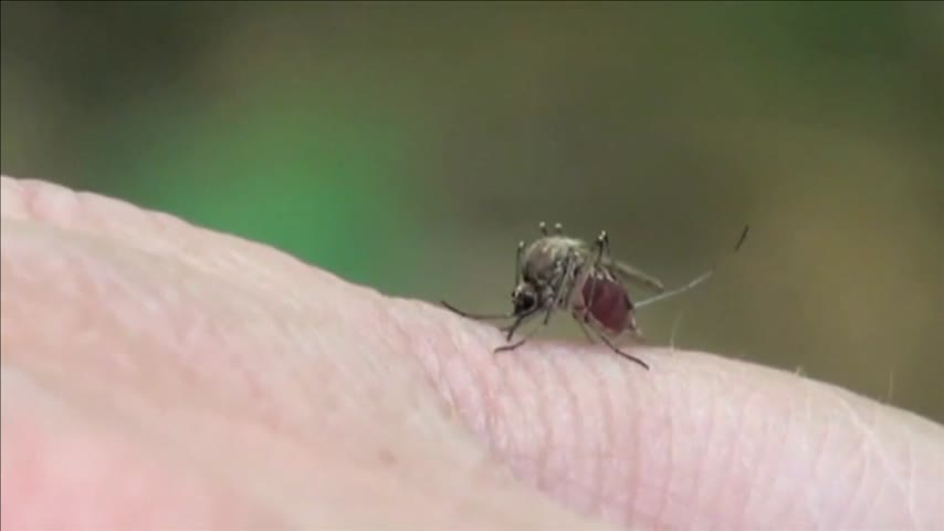 Lubbock's First Human Case of West Nile for 2016