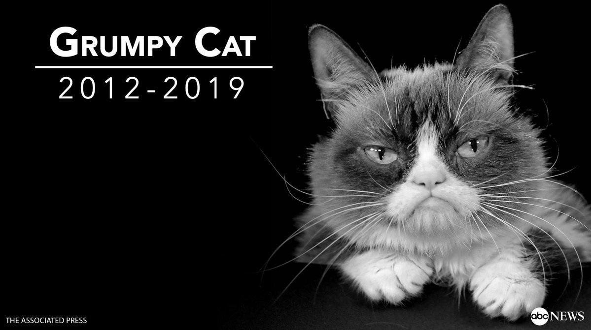 Grump Cat died ABC News