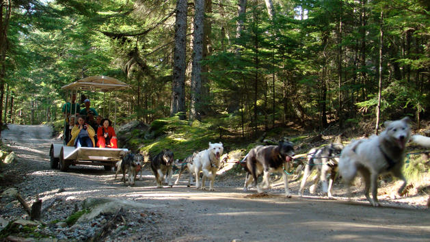 disney-cruise-mushers-camp-sled-dog-experience