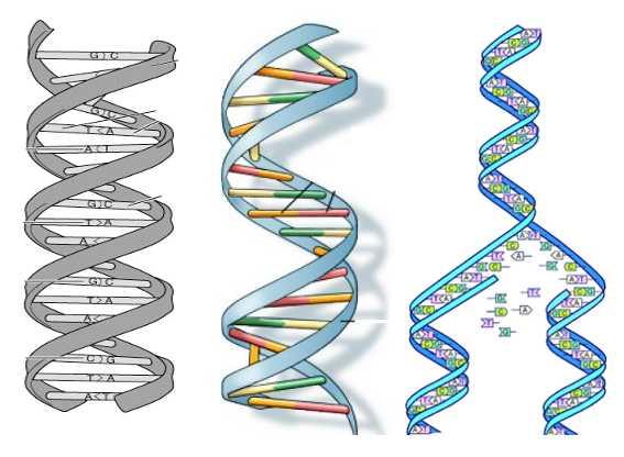 BioBeans: Where it all begins - DNA