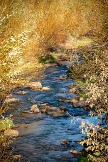 Whitewood Creek