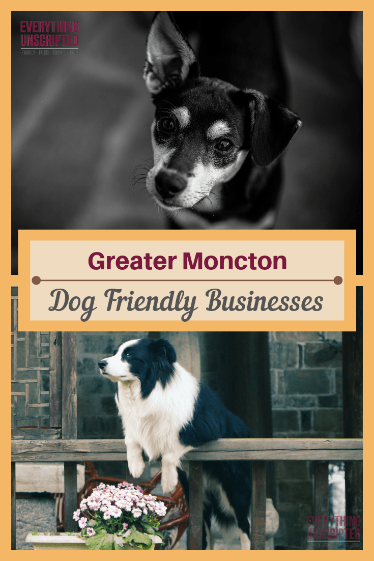 Dog Friendly Moncton