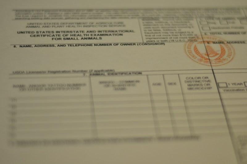 usda pet travel certificate | Travelyok.co