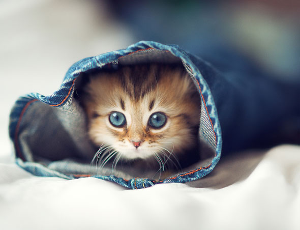 cat-and-jeans-1