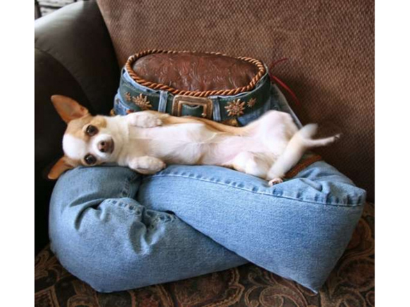 dog-and-jeans-2