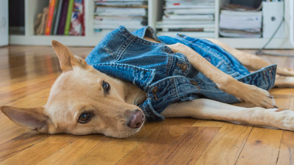 dog-and-jeans-3
