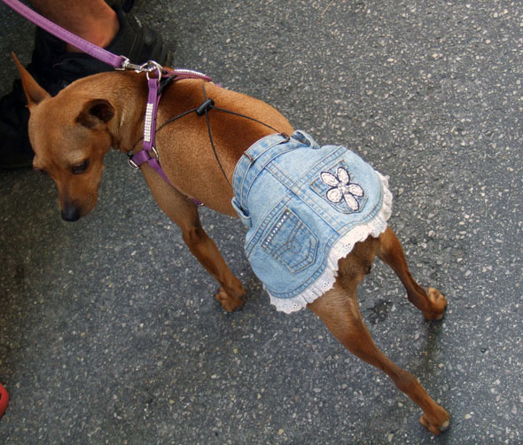 dog-and-jeans-5