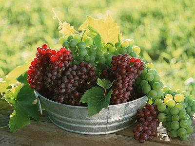 menikmati tanaman surga, buah anggur