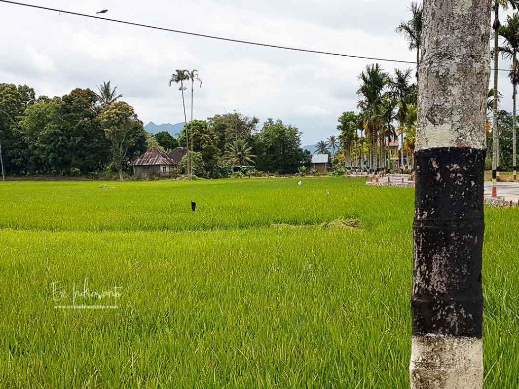 Sungai Batang Agam di belakang rumah ini