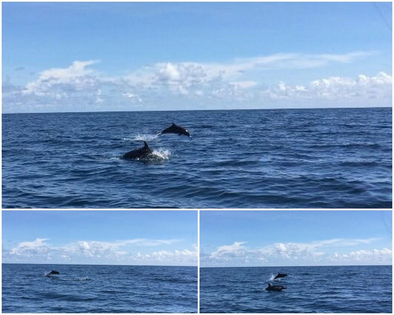 Lompatan kawananan lumba-lumba derawan