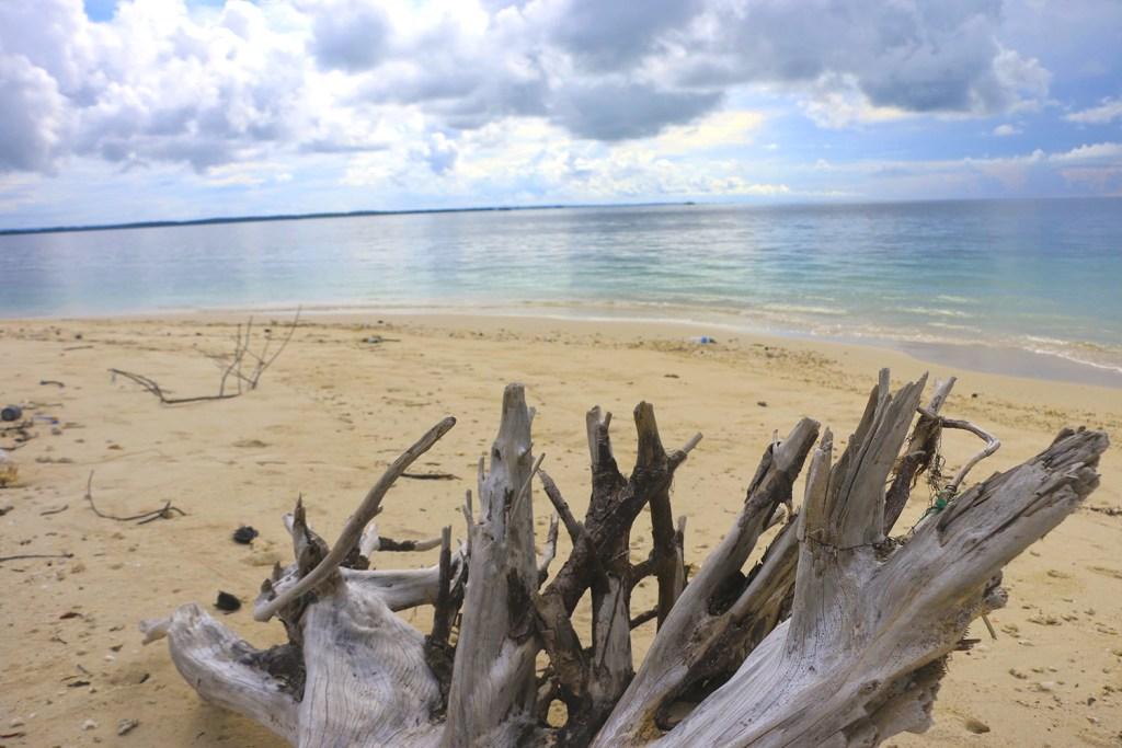 Kayu Apung Driftwood
