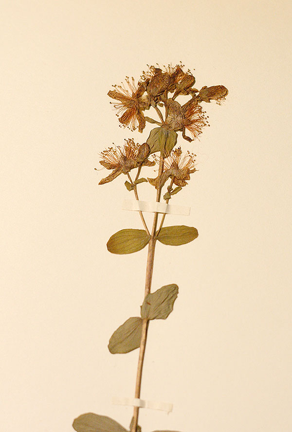 herbarium3