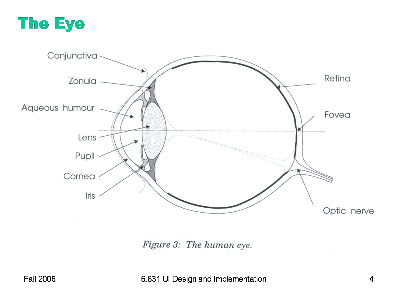Blank Human Eye Diagram