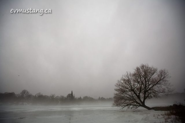 image of the Otonabee river covered in mist