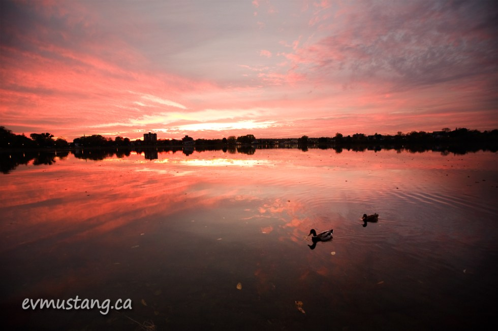 image of ducks on a lake at sunset