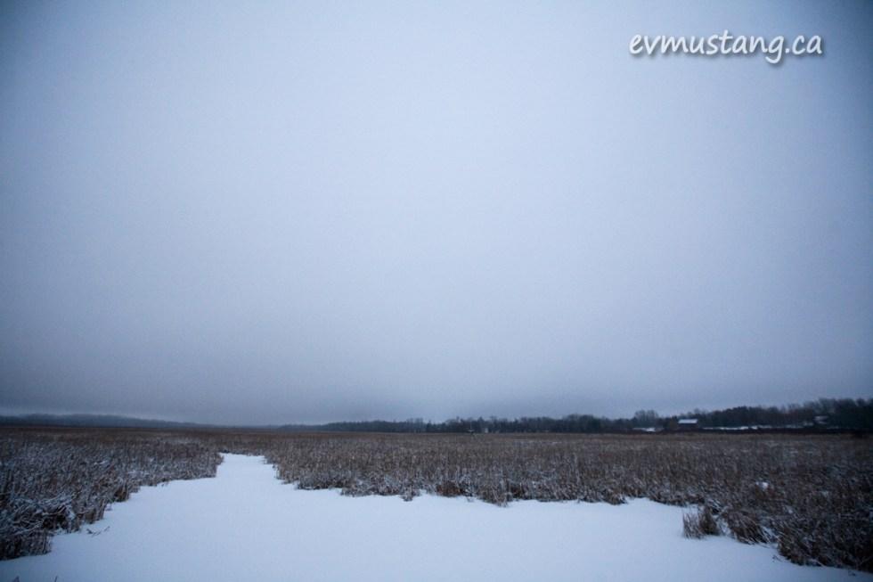 image of Miller Creek Marsh in winter