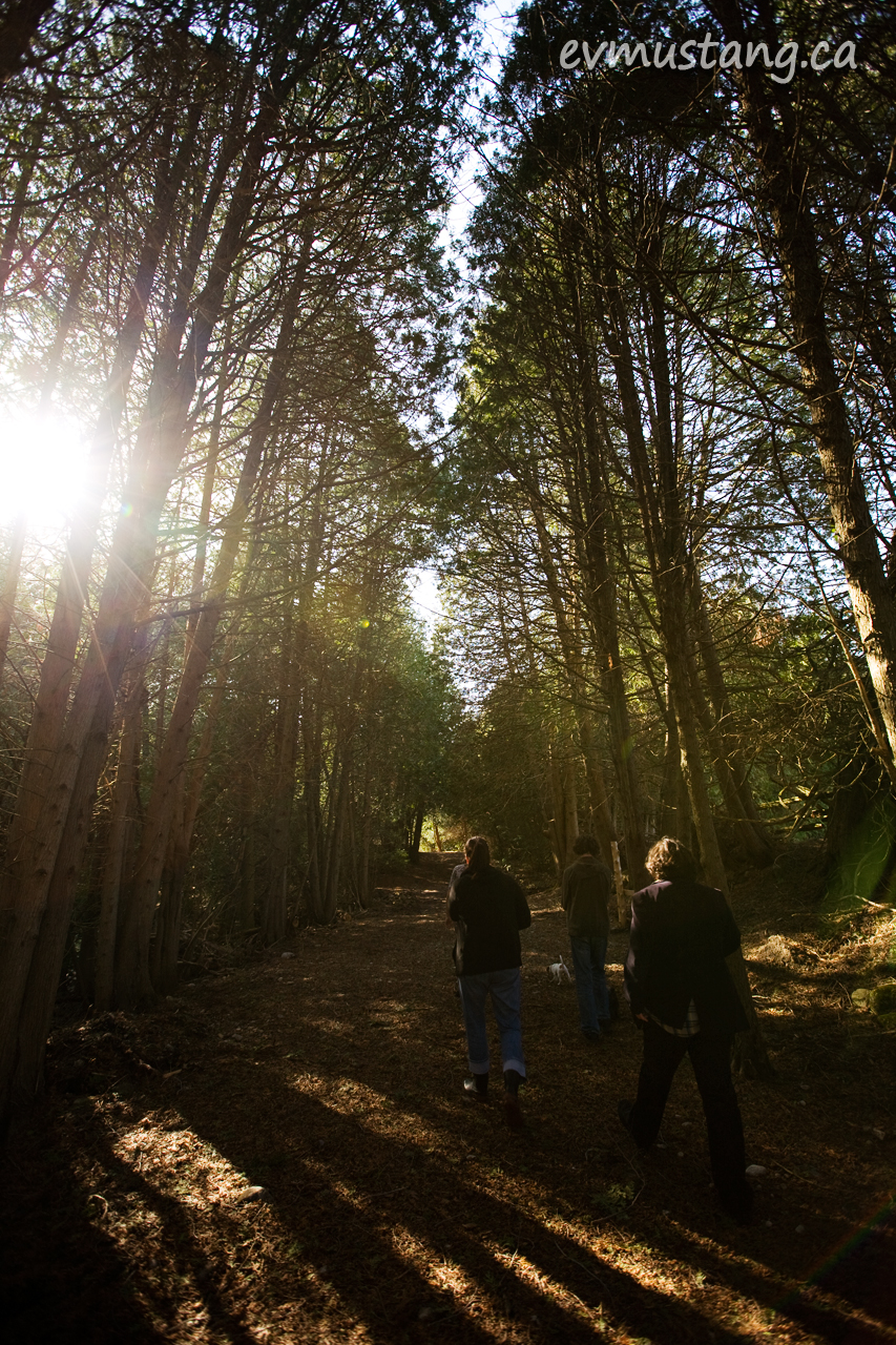 image of people walking through forest
