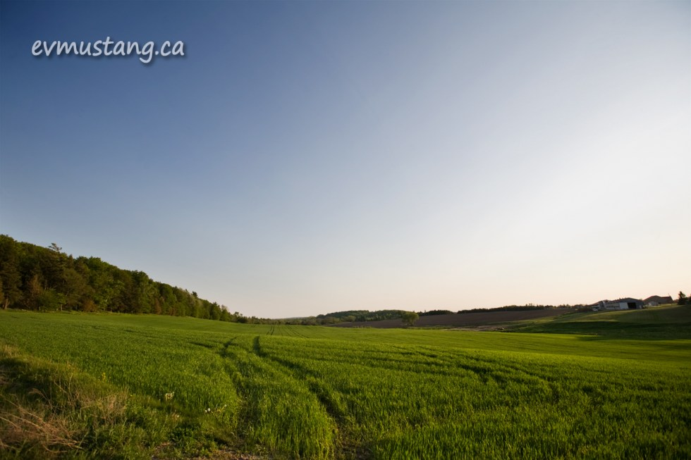 image of green field in spring under a clear sky