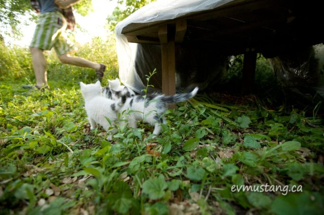 image of three kittens playfully chasing someone running out of the frame
