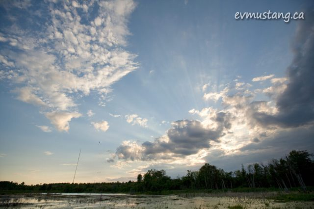image of marsh in Peterborough, Ontario with CHEX tower in background
