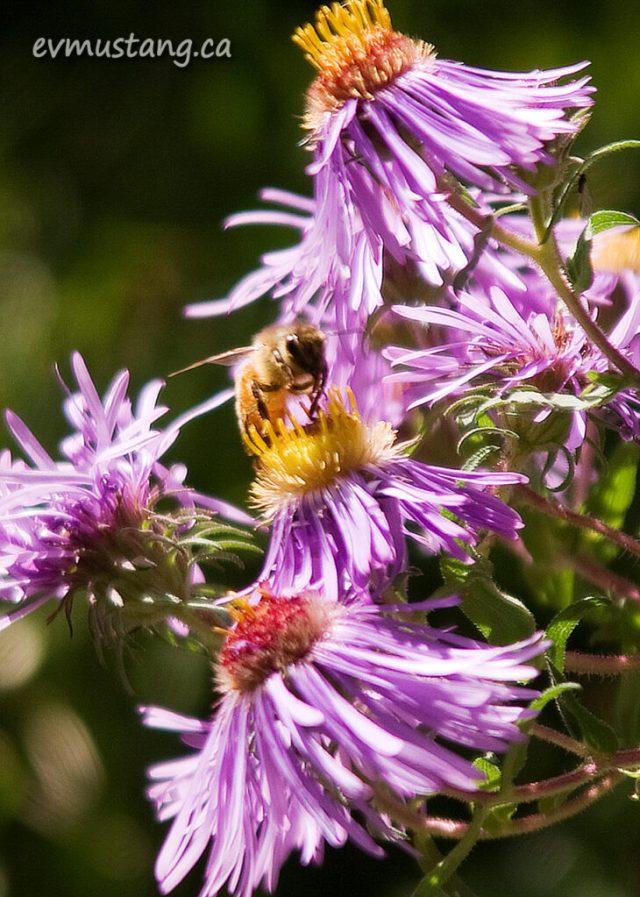 image of bee landing on flower