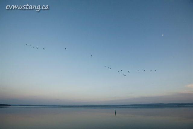image of geese flying over lake