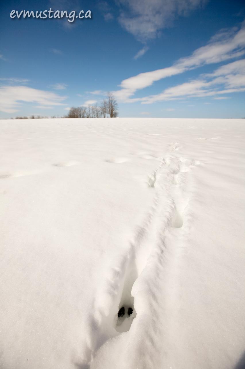 image of deer tracks in deep snow