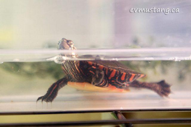 turtles06