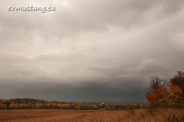 image of soy field in fall under sloudy sky