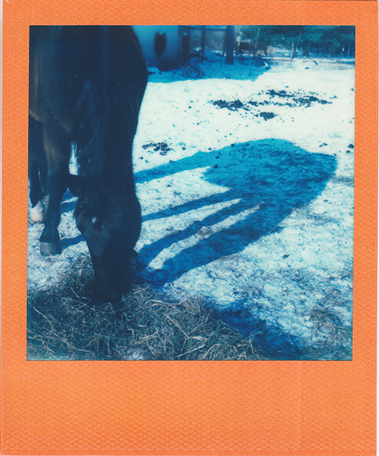 scan of a polaroid photograph of a horse and his shadow in a snowy field