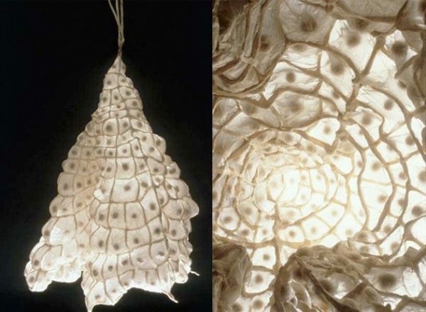 Mary Burton Durell Paper Sculptures, paper art, biomimetic design, cellular structures