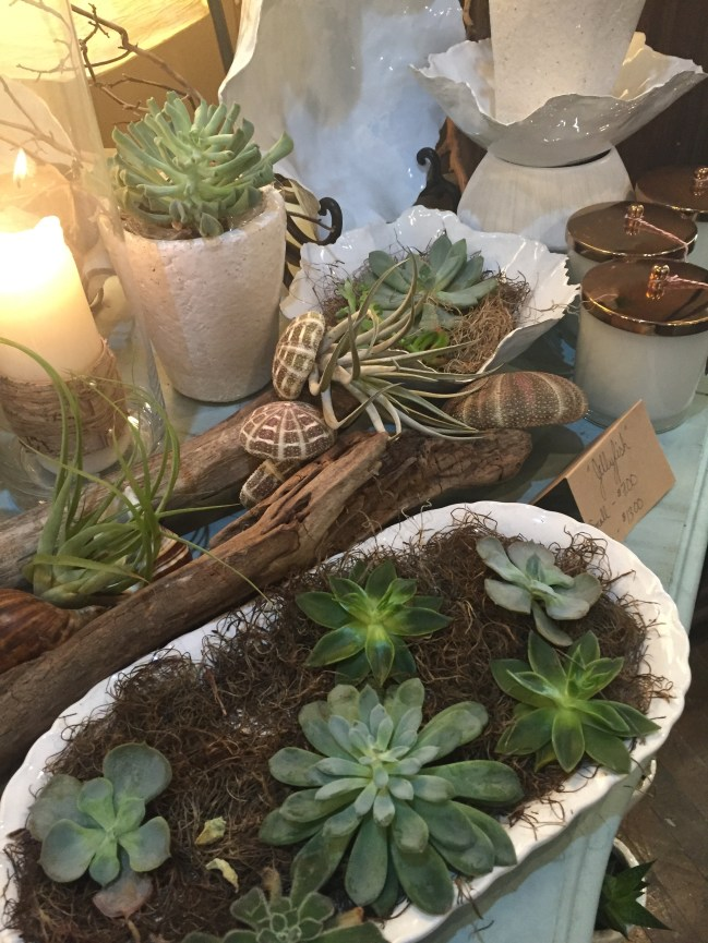 sherwood-florist-succulents