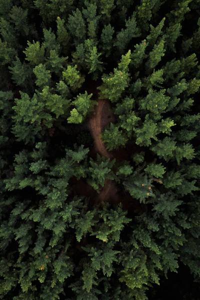 chemin dans la forêt de ses croyances