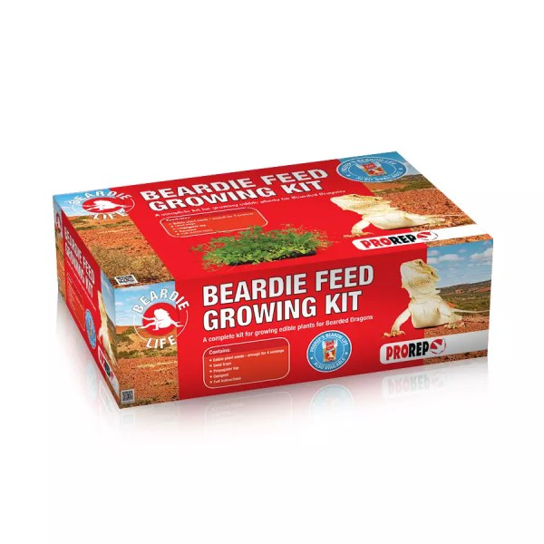 Bearded Dragon Feed Growing Kit KPT055