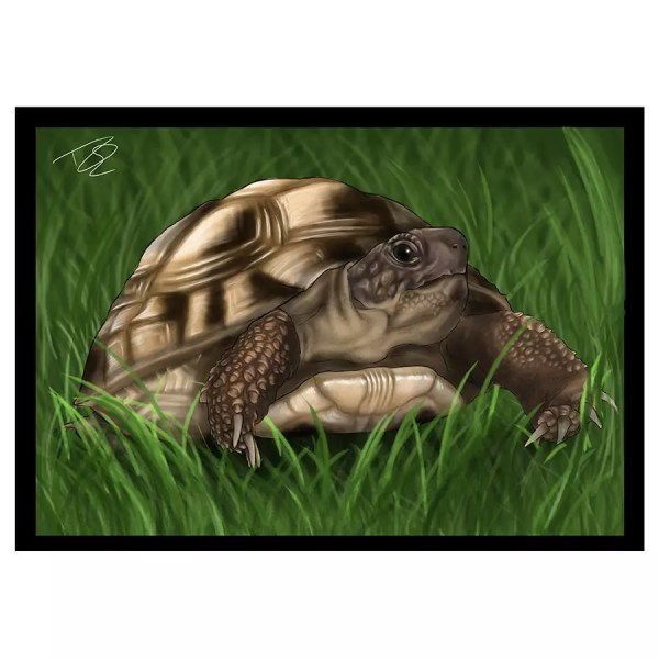 Tortoise Greetings Card