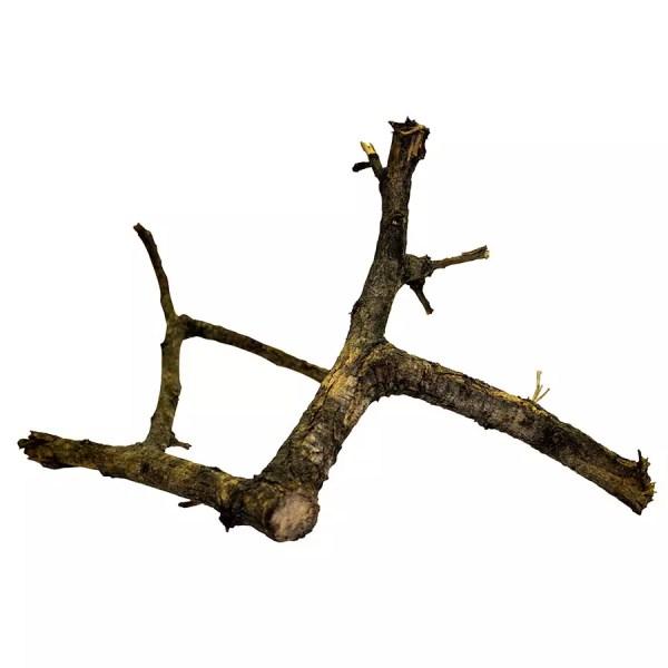 ProRep BLACK Acacia Branch MEDIUM