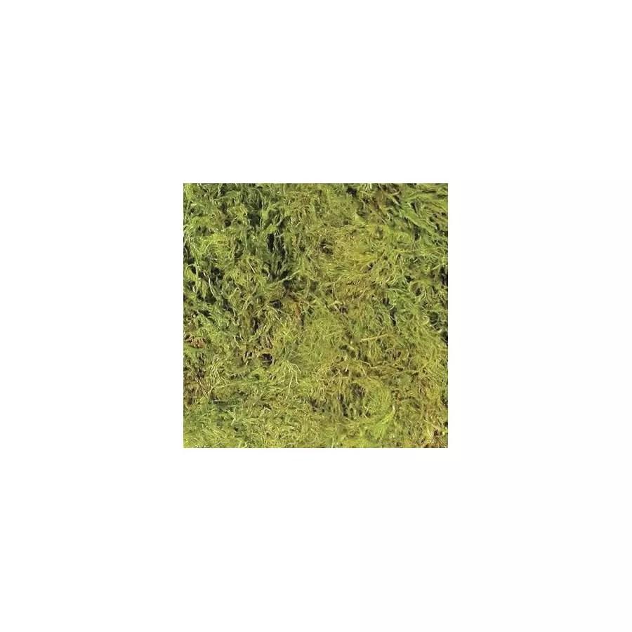 Zoomed Terrarium Moss Large 3 28l Cf 2l Evolution Reptiles