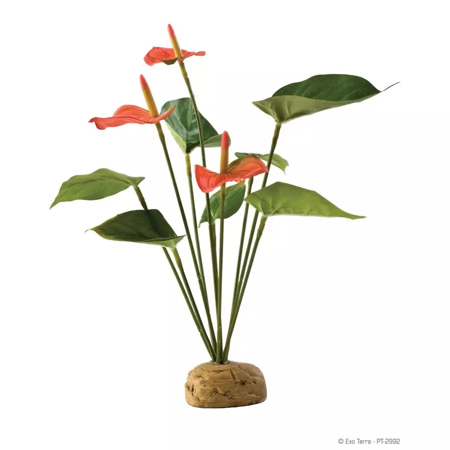 Exo Terra Anthurium Bush