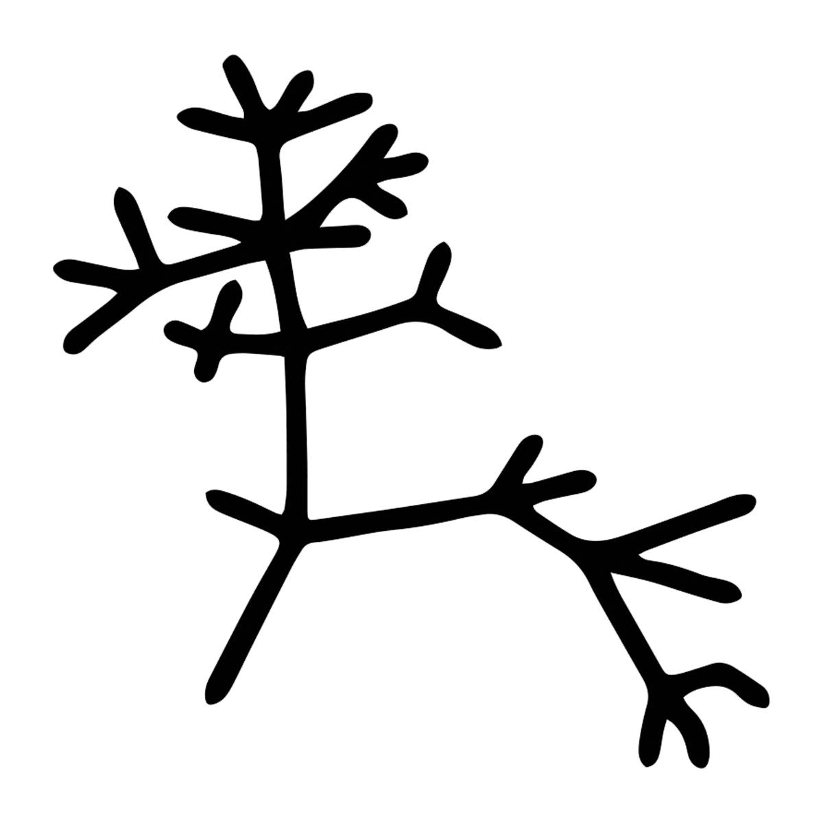 Darwin Tree Of Life Outline Vinyl Decal