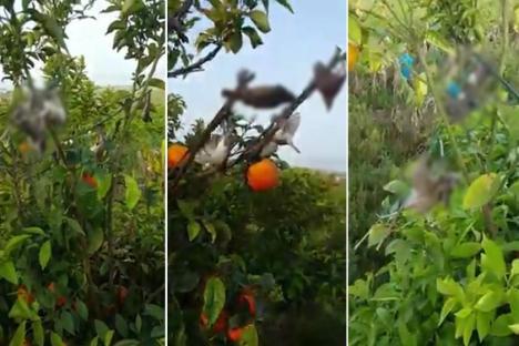 Osmaniye kuş cennetinde kurulan tuzaklarla kuşlar katlediliyor