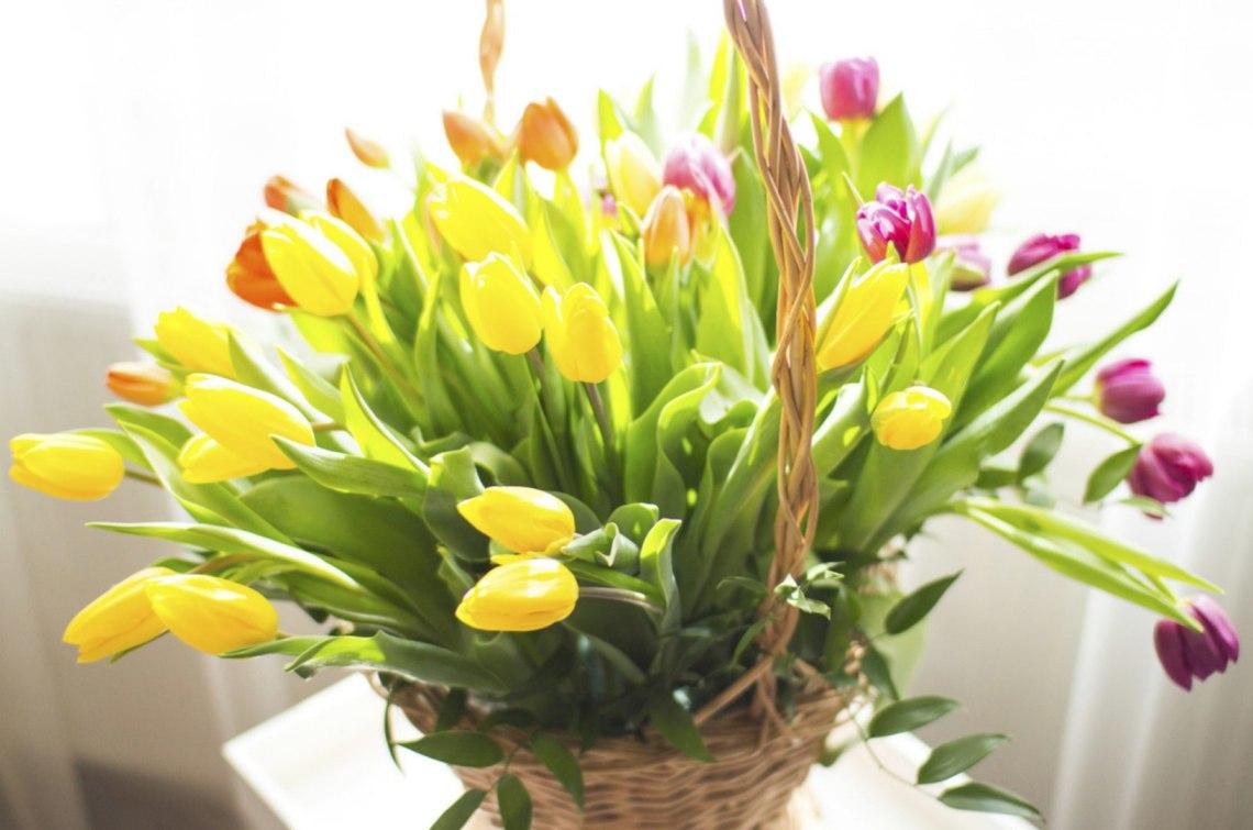 Urodzinowe_Tulipany