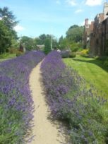 lavendar path