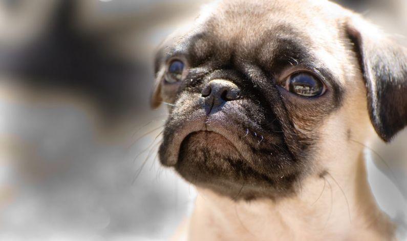 Tropické teploty přinášejí vyšší riziko přehřátí, týká se to i psů