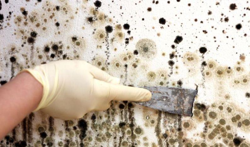 Jak se zbavit plísně? Odstranění, likvidace, sanace, dezinfekce Praha