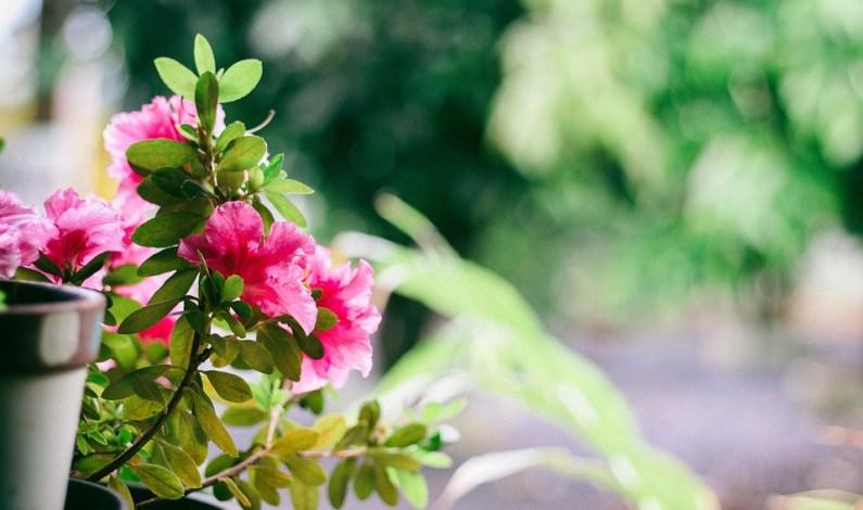 4 skvělé tipy na pěstování rostlin v bytě